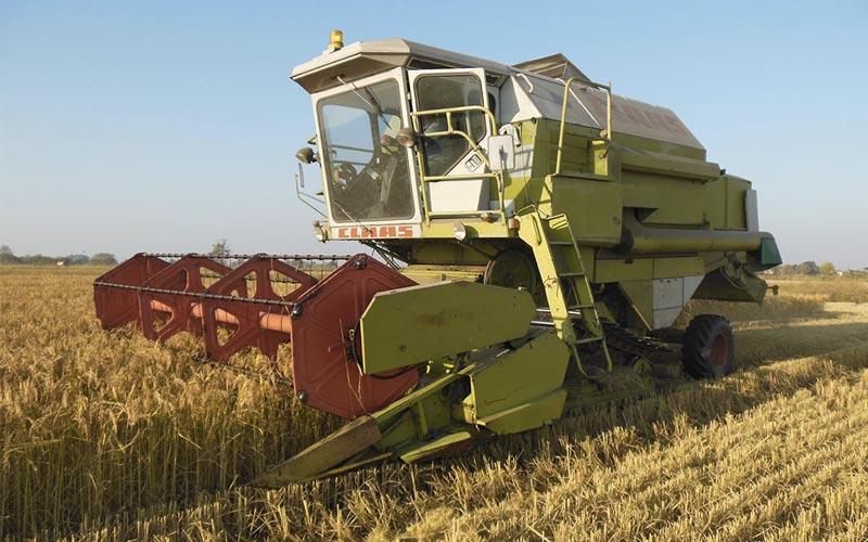 Riso Pavia - Coltivare il riso